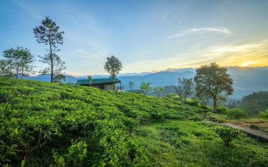 Madulkelle Tea - Eco Lodge - Kandy | Cosy Places by C&C